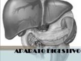 Aparato digestivo: páncreas, hígado y duodeno